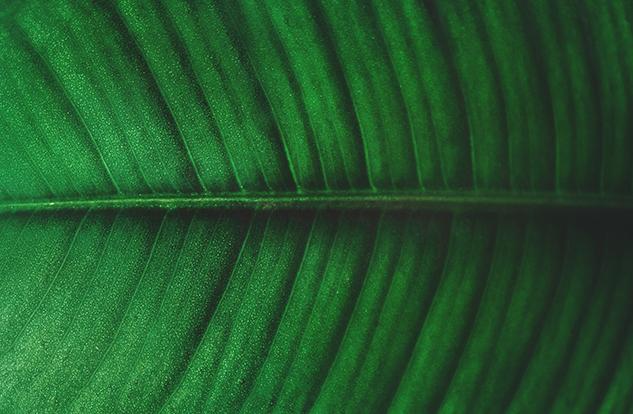 leaf iamge